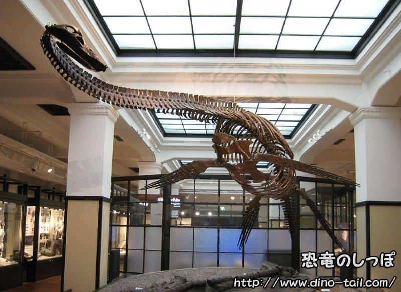 フタバサウルス|フタバスズキリュウの全身骨格化石