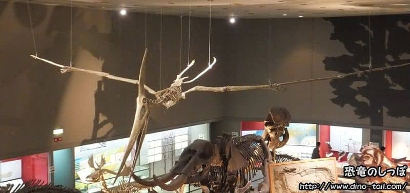 プテラノドンの全身骨格化石