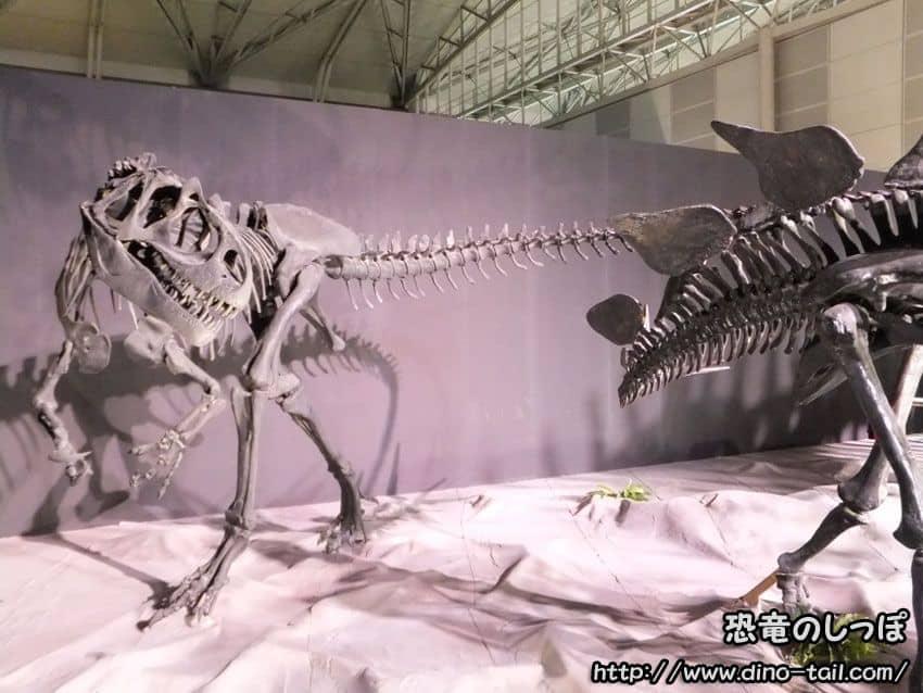 アロサウルス 全身骨格化石