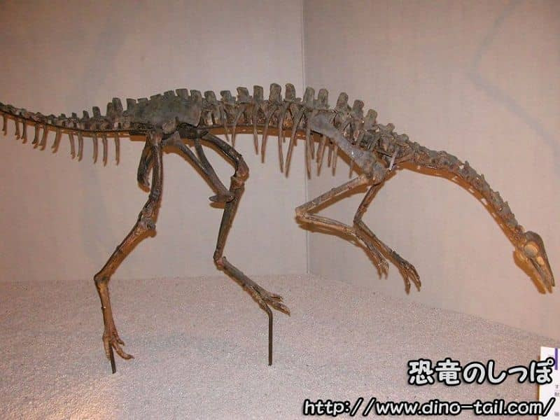 アーケオルニトミムス | 恐竜のしっぽ -図鑑-