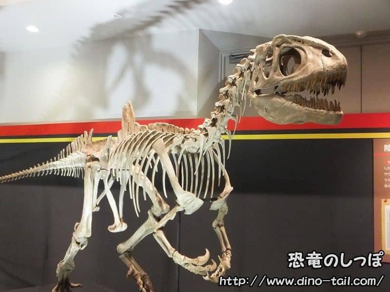 コンカベナトール 化石