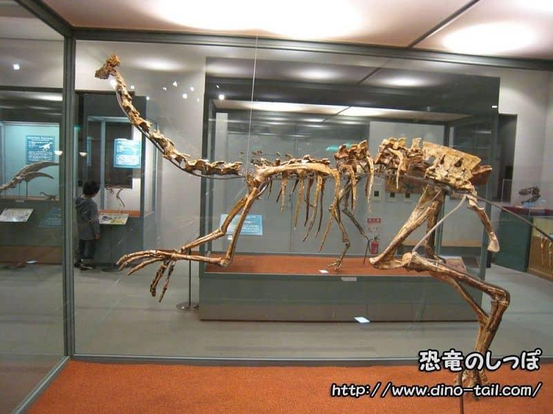ガリミムス | 恐竜のしっぽ -図鑑-