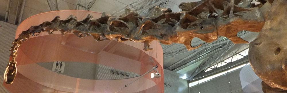 竜脚類の骨格化石