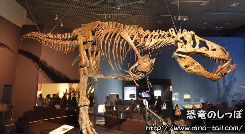 ティラノサウルスの全身骨格化石