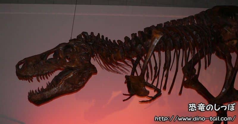 ティラノサウルス・スー(SUE)の全身骨格化石